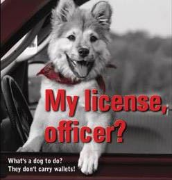 My License, Officer?